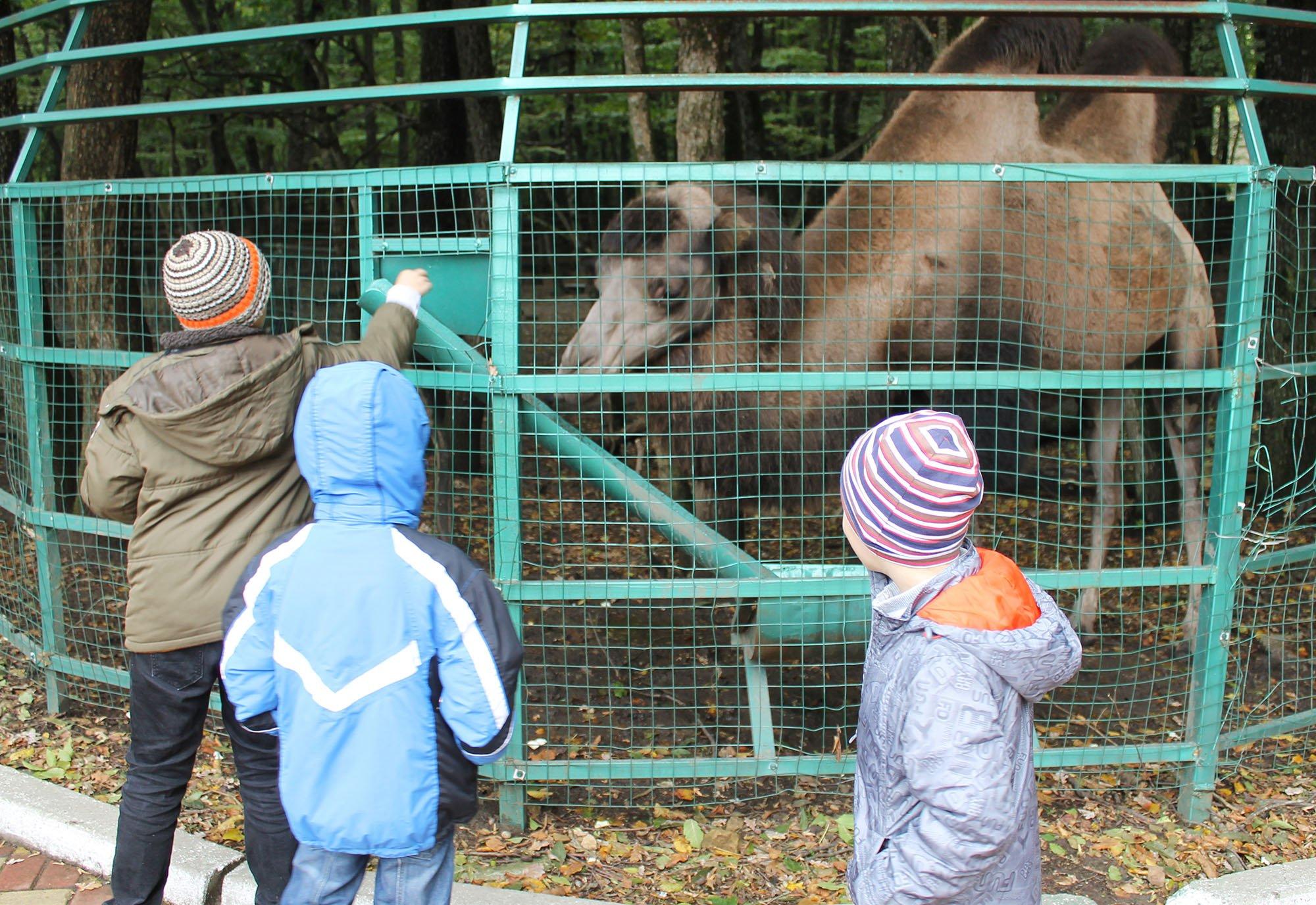 Маленькие пациенты больницы посетили зоопарк в Парке Победы